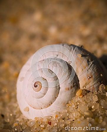 Spiral on sea