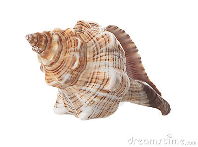 Spiral Sea Shell Isolated