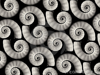 Spiral sea shells background
