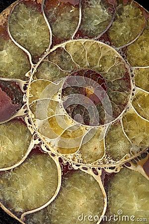 Spiral shell Macro