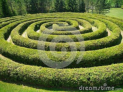 A spiral shrub maze