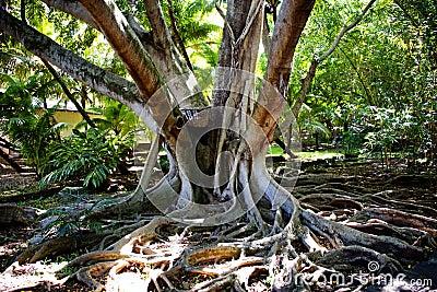 Spiry roots