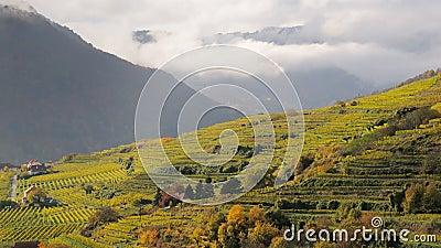 Spitz vineyards no.4
