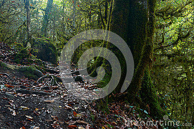 Spöklik halloween mossig skog