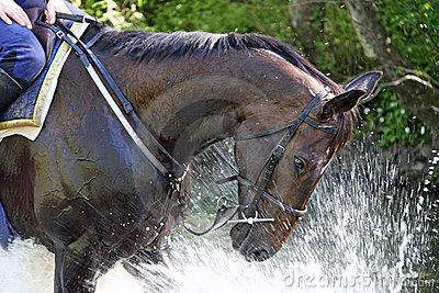 Splash fun horse