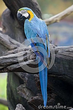 Splendid parrot in the wilderness