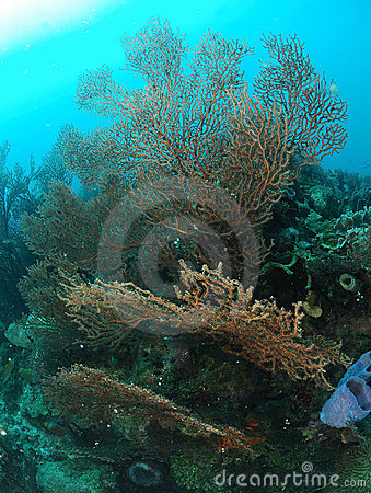 Sponge plants in coral reef