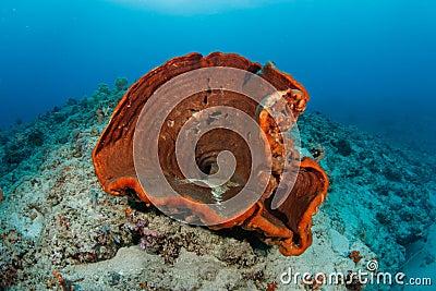 Sponge in tropical coral reef