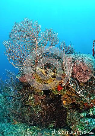 Sponges on coral reef