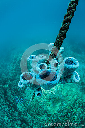 Free Sponges Growing On Rope Stock Images - 50488284