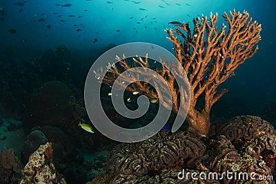Sponges on the reef at Ras Arta