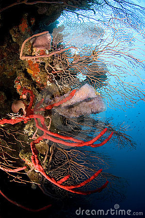 Sponges and sea fans