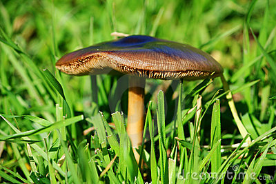 Spontaneous mushroom