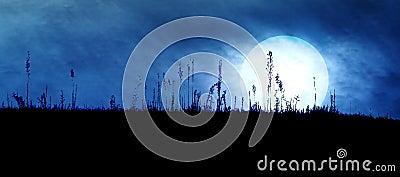 Spooky Dark Landscape