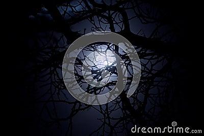 Midnight Moonlight - Wikipedia