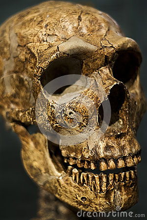 Spooky Skull Stock Photo - Image: 25120960