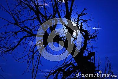 Spooky Tree 7