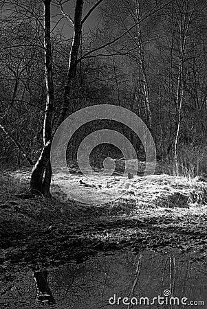Free Spooky Woods Stock Photos - 4254883