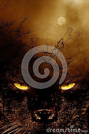 Spookycat1
