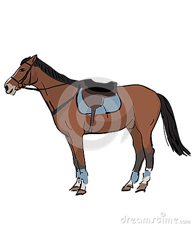 Sport horse with saddle