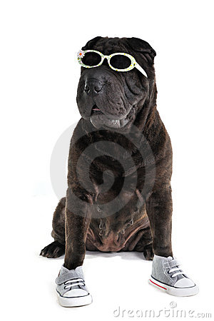 Sporty casual Shar-pei