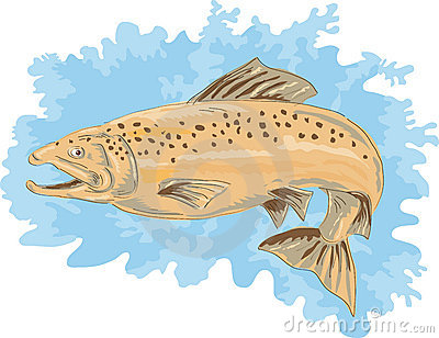 Spotted brown  trout jumping