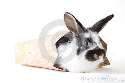 Spotted bunny in the bag, isolated