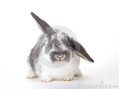 Spotted bunny, isolated