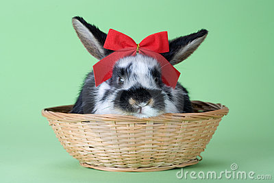 Spotted bunny with red bow tie, isolated