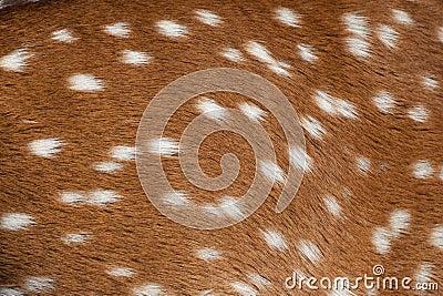 Spotted deer fur