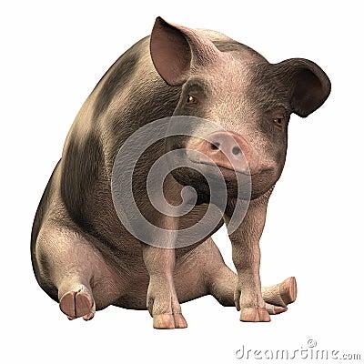 Spotted Piggie - 01