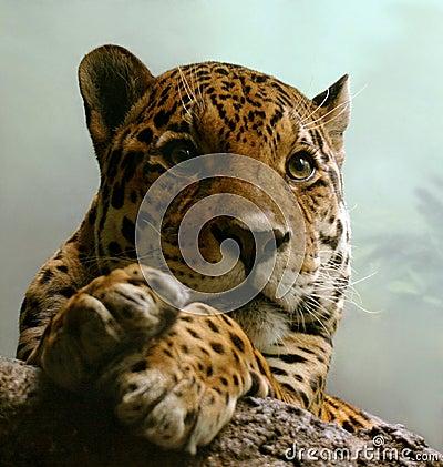 Free Spotty Jaguar Stock Photo - 2504970