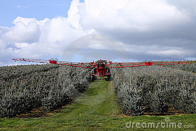 Spraying insecticide.