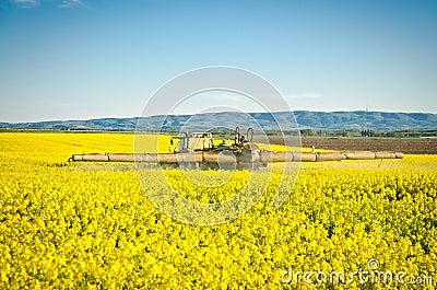 Spraying oilseed rape