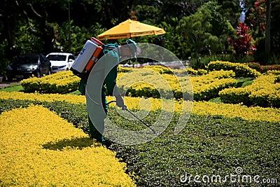 Spraying pesticide in the garden. Salvador, bahia / brazil - november 8, 2019: man is seen spraying pesticide on garden pests in the city of Salvador royalty free stock images