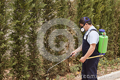 Spraying trees- pest control