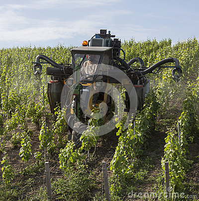 Spraying a vineyard with insecticide Editorial Stock Image