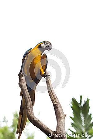 Sprekende papegaai