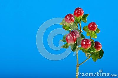 Sprig of berries