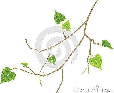 Sprig of birch