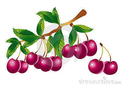 Sprig of cherry