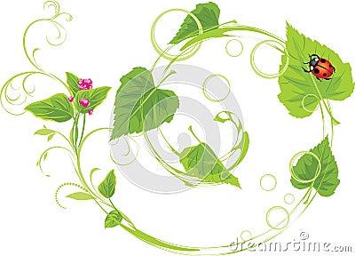 Sprig con i fiori ed i fogli della betulla