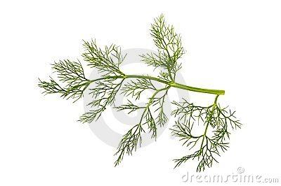 Sprig of fennel