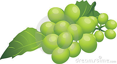Sprig of green grape