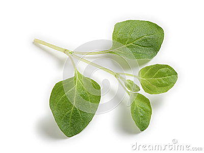 Sprig of oregano