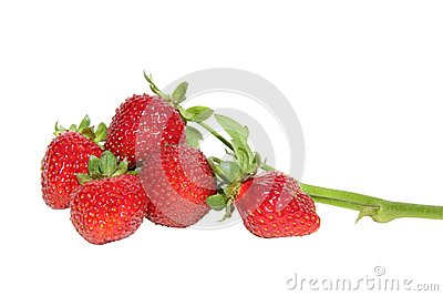 Sprig of strawberries on a white background