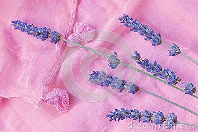 Sprigs of lavender are on a pink scarf