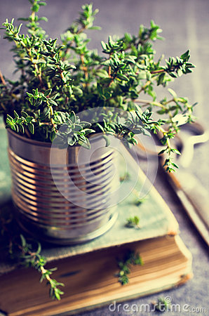 Free Sprigs Of Fresh Thyme Royalty Free Stock Photography - 68432547