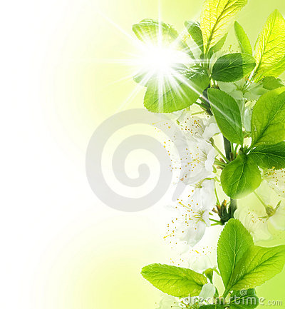 Free Spring Stock Images - 11983984