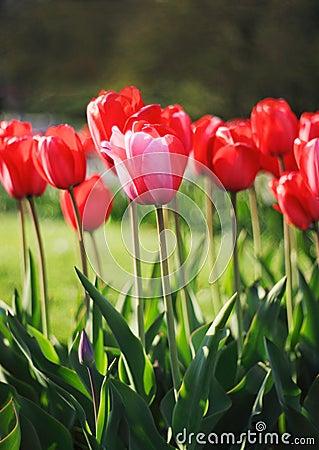 Free Spring Stock Photo - 12130680